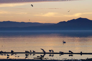 Salton Sea Photo Gallery