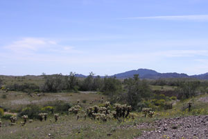 Picacho Back Country Photo Gallery