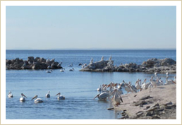 Salton Sea Facts, Information, Frequently Asked Questions
